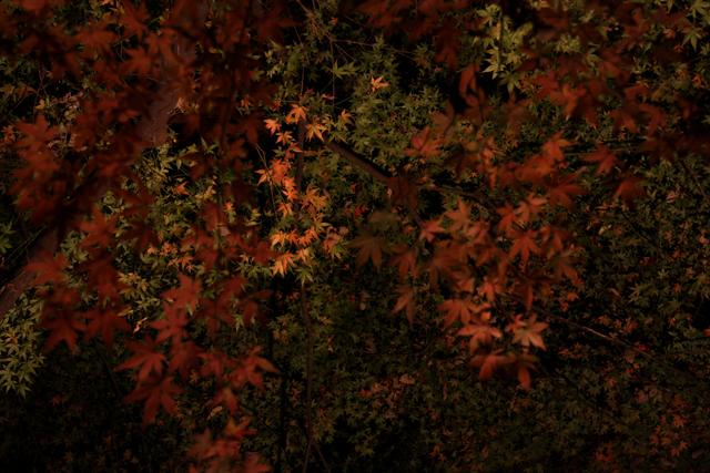 2008_12_06_4504.jpg